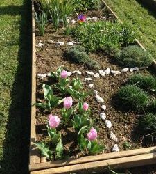 Voilà les tulipes!!!